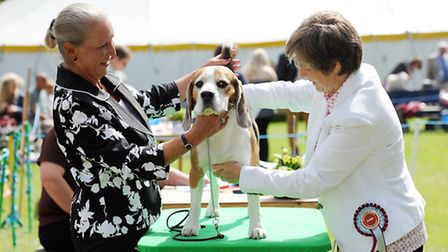 Scenes from the Royal Norfolk Show 2014 - Scenes from this years dog show. Picture: Matthew Usher.
