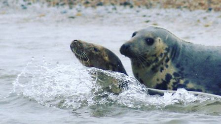 Swimming lessons in North Norfolk