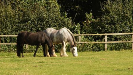 Oliver (brown) and Boo at Redwings Horse Sanctuary. Picture: Redwings.