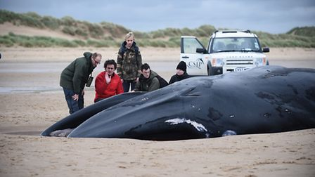 The fin whale which was has been washed up on the beach at Holkham. Picture: Ian Burt