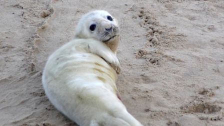 Baby seal at Horsey by @dellipsee