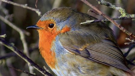 Robin on this mornings walk by @dean.smithphotography