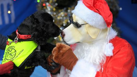 Santa Paws meeting Dora the spaniel from Dogs for Therapy at the dog themed event outside the Forum,