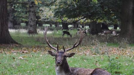 Accidentally woke this handsome stag form a deep sleep by @powlesey