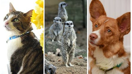 Top animal stories of 2016: Claudia the Cat, Animal Inventory and Dilber the Corgi (L-R). Photo: Arc