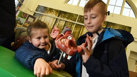 Wensum Junior School Science Fair. Tyleigh Cole, 5, and her brother Tate, 10, looking a model of a h