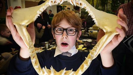 Wensum Junior School Science Fair. Tom Piercy, 11, with a jaw bone from a mako shark.Picture: ANTONY