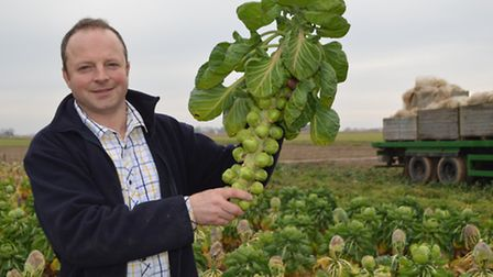 Charlie Tacon's farm at Rollesby has seen some of its Christmas sprouts damaged by diamondback moth
