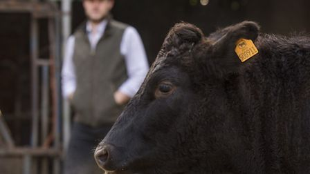 Bruce Paterson from Worsted Farms is starting Norfolk's first Wagyu beef herd.