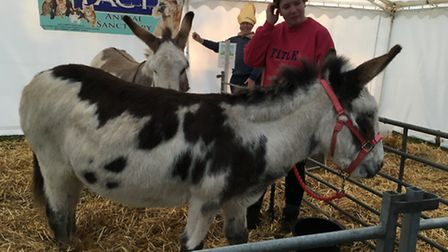 Donkeys from PACT Animal Sanctuary feature in an outdoor nativity at St Mary's Church in Watton. Pic