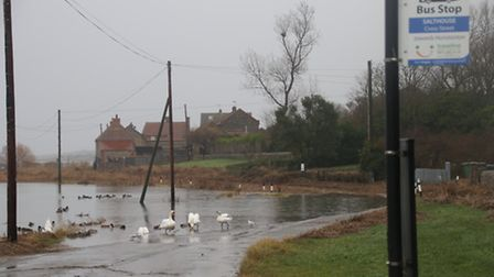 Swans swim on the normally busy A149 Coast Road in Salthouse on Sunday. Picture: ALLY McGILVRAY
