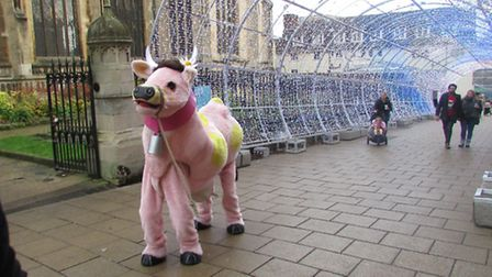Even Daisy-Belle the panto cow got out and about to explore Norwich. PHOTO: Norwich Theatre Royal.