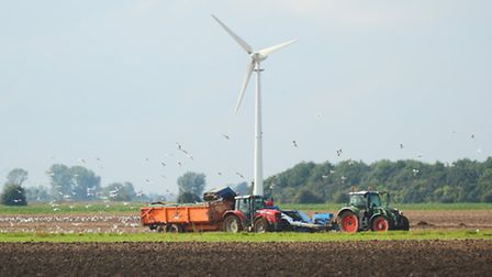 Potato lifting in a field at Terrington St Clement. Picture: Ian Burt