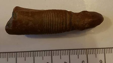 The phallus-shaped fossil was found on the same stretch of coastline where the skeleton of a mammoth