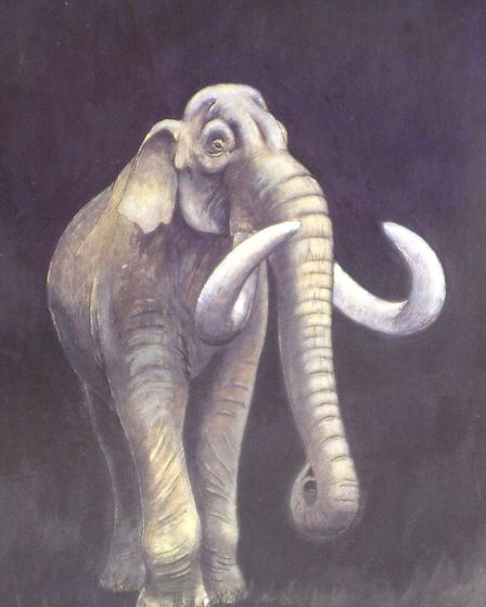 An illustration of the West Runton elephant. NORFOLK MUSEUMS SERVICE