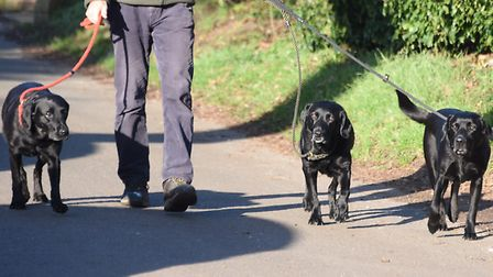 Dogs on the walk in the campaign to reinstate part of the the Reedham village footpath. Picture: DEN