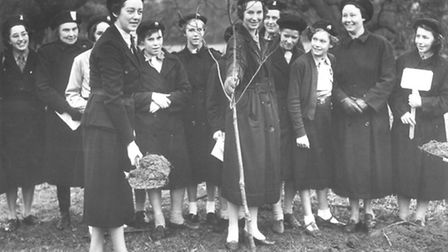 Guides planting tree at Raveningham Hall in 1957. Picture Archant Library.