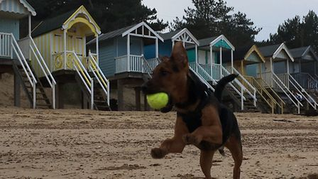 A dog has a ball at the beach at Wells, which has been named one of the most dog friendly beaches in