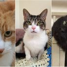 Jaffa, Tabitha and Trump are all up for adoption at RSPCA East Norfolk. Photos from RSPCA East Norfo