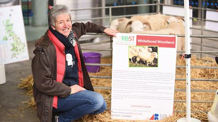 Whiteface Woodland Sheep were at The Forum in Norwich, as part of Makers Month. Pictured is Gail Spr