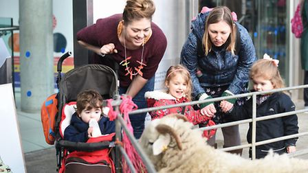 Whiteface Woodland Sheep were at The Forum in Norwich, as part of Makers Month. Picture: Ian Burt