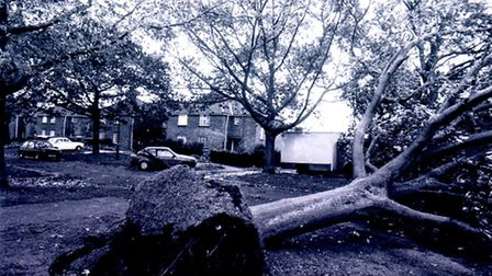 Massive tree is uprooted on a road in Norwich during the 1987 storm. Photo from Archant Library.