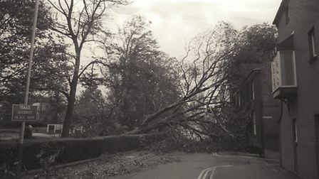 Great storms in October 1987 caused many trees to fall. Photo from Archant Library.