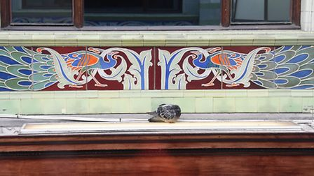 Painted ceramic tiles in parianware of peacocks in the Royal Arcade. Picture: DENISE BRADLEY