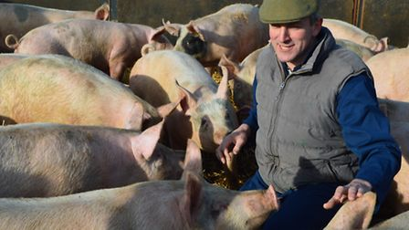 The food chain behind Charlie Hodson's award-winning Nelson sausage roll. Pictured: Pig farmer Tim A