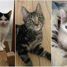 Aspall, Olaf and Scrumpy are all up for adoption at RSPCA East Norfolk. Photos from RSPCA East Norfo
