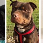Athena, Simon and Scrumpy waiting to be rehomed. Photo's: RSPCA East Norfolk