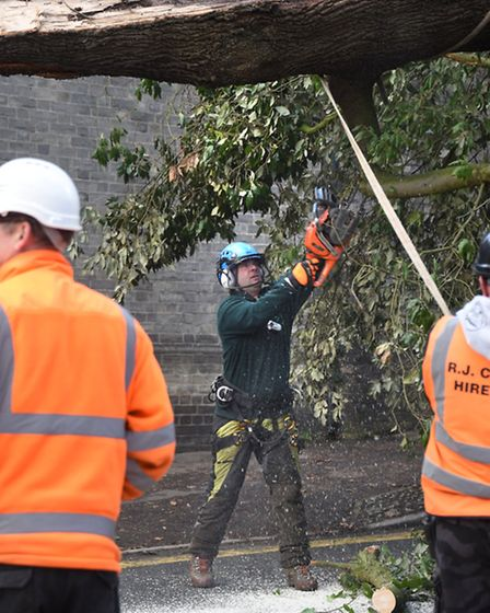 A tree that fell in Storm Doris is lifted over the houses on Bracondale, Norwich.Picture: ANTONY K