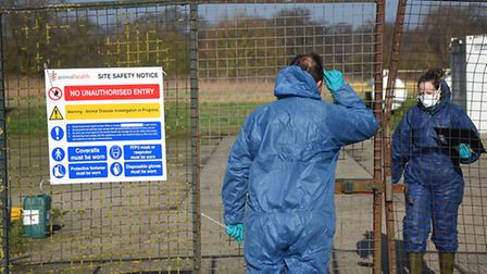 The scene of the initial bird flu outbreak at Redgrave. Picture: ANTONY KELLY