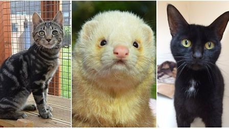 Some of the lovely animals waiting for new homes at the RSPCA East Norfolk branch.