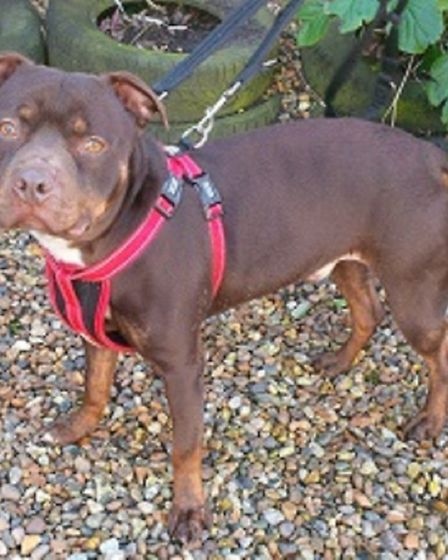 Simon. Picture: RSPCA East Norfolk