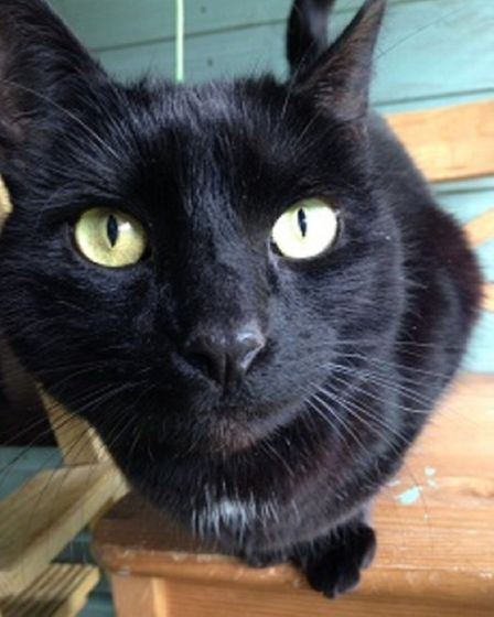 Thomas. Picture: RSPCA East Norfolk