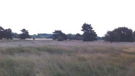 Thetford Town Council is undertaking a environmental project on Barnham Cross Common.
