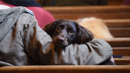 Taking it all in at the Wangford Pet Service. Picture: DENISE BRADLEY