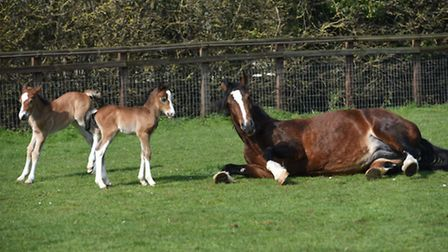 Lee and Anna Smith are owners of rare twin foals.