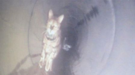 CCTV operatives for Highways England were surprised to spot a deadly chase down a drainage tunnel. P