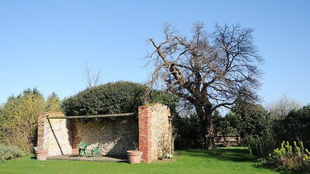 The mulberry tree in the grounds of Heacham Manor. Picture: Chris Bishop