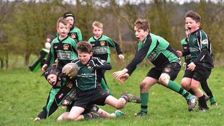 North Walsham Rugby Club host a mini rugby festival for junior teams from around the county.Beccles