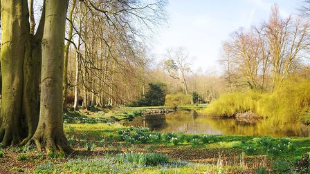 Signs of spring at Gayton Hall gardens near King's Lynn, open for Mothering Sunday as part of the Na
