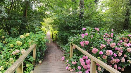 Fairhaven Woodland and Water Garden in South Walsham. Picture: James Bass
