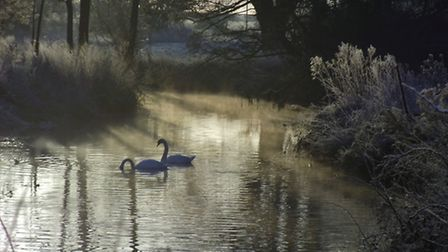 Swans on a frosty river Blackwater in Stisted, Essex. Which is a setting used in The Essex Serpent.
