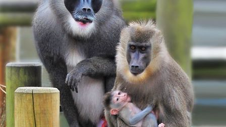 Meet the proud parents of the latest and rare birth at Africa Alive! Picture: Courtesy of Africa Ali
