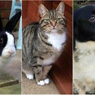 These animals are all currently avaliable for adoption at the RSPCA. Photos from RSPCA East Norfolk.