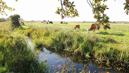 Carlton Marshes Nature Reserve, which will host a Walk in the Park event. Picture: James Bass