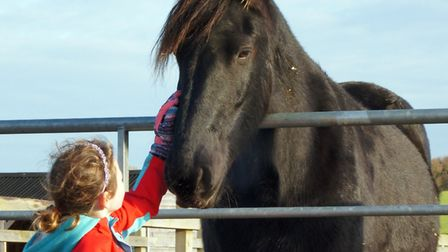 Maya has become a favourite with visitors. Picture: Redwings Horse Sanctuary