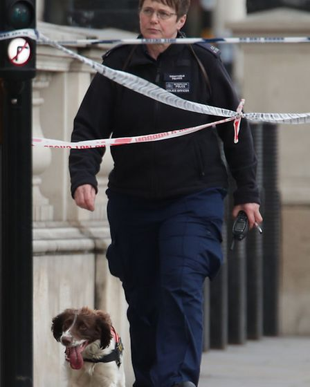 A Police dog and handler close to the Palace of Westminster, London, after policeman has been stabbe